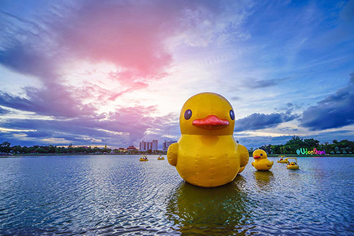 Duck on the sea